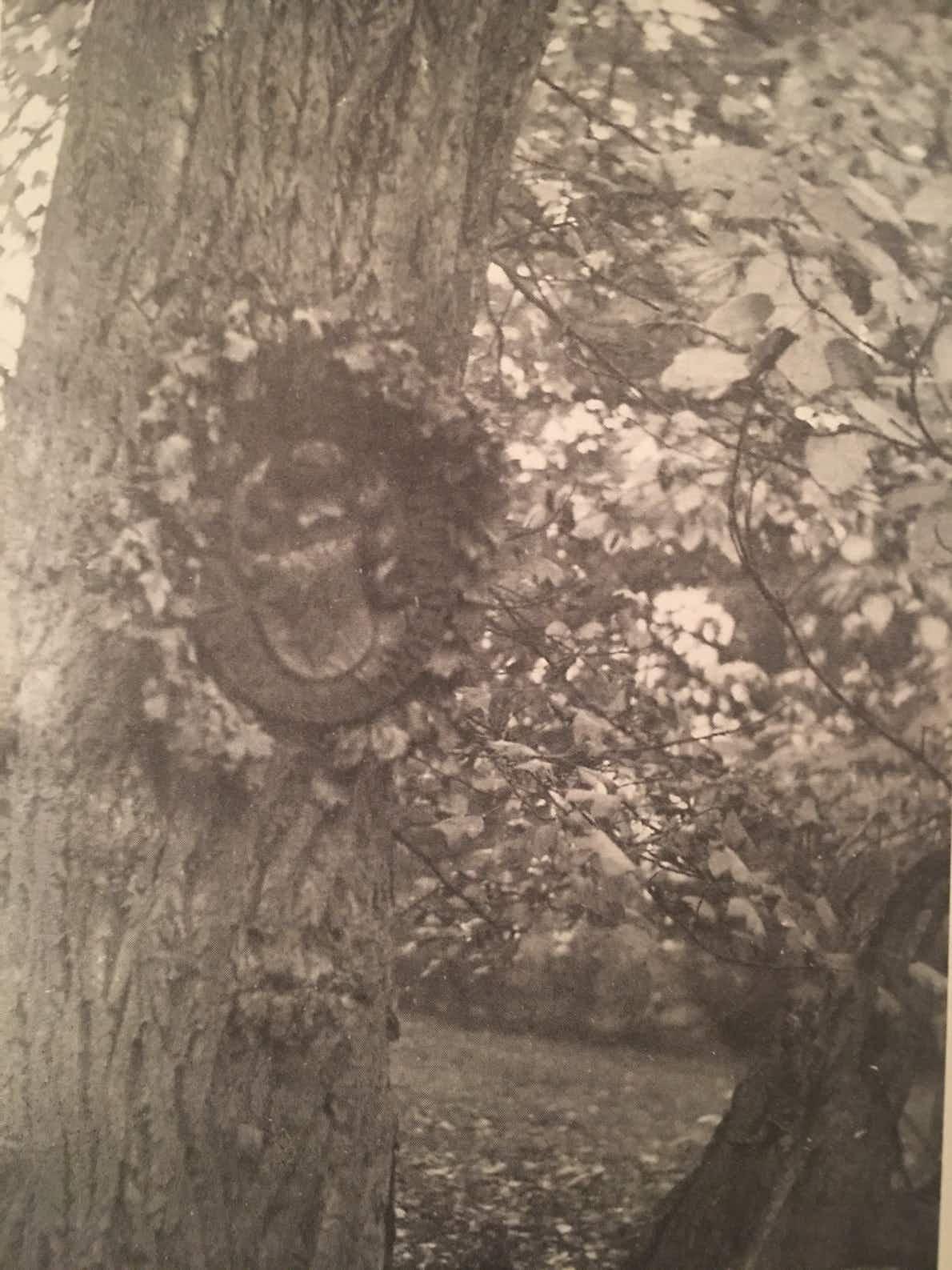 5 Wappenplatte im Trebbower Park, von Schulenburgs Schwester Tisa angefertigt und am 5. September 1944, seinem Geburtstag, angebracht. Name, Geburts- und Todesdatum wurden von einem Kranz bedeckt.